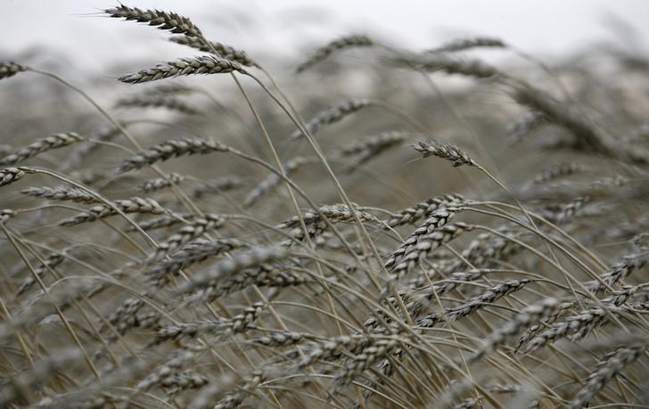 Государство терпит огромные убыткииз-за экспорта теневого зерна / Иллюстрация REUTERS