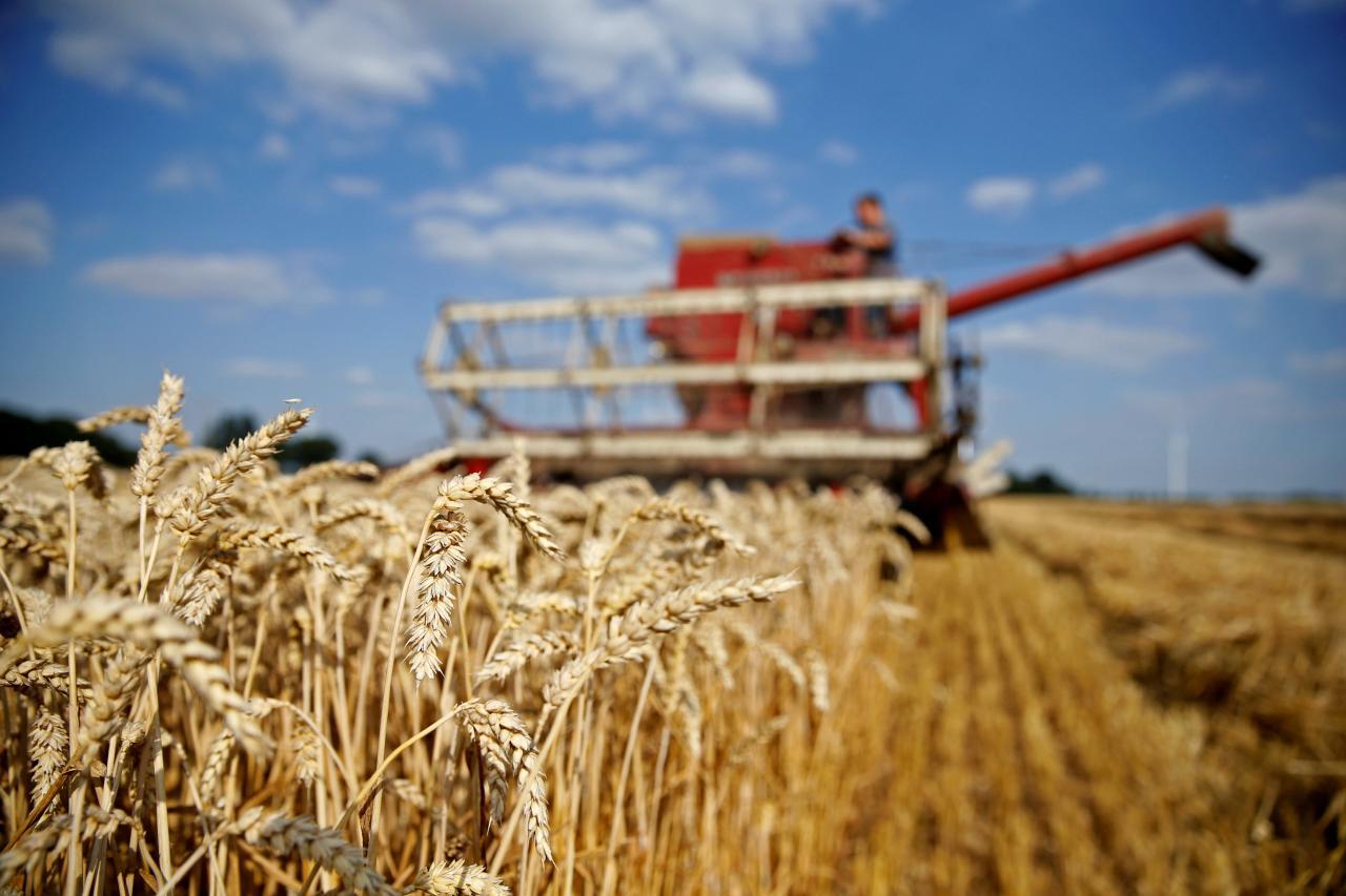 В Украине собрали урожай пшеницы меньше, чем в прошлом году ./ Иллюстрация REUTERS