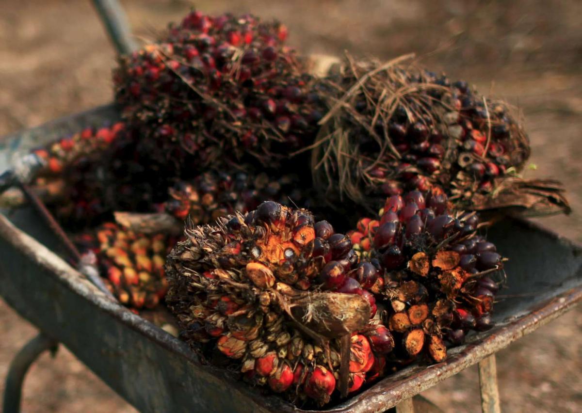 Ввоз пальмового масла вРоссию замесяц вырос на53%