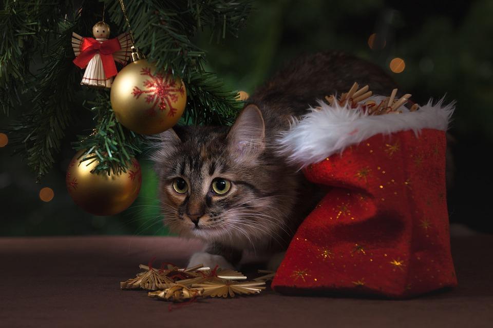 Уместными будут и традиционные новогодние цвета - красный, зеленый и золотой / фото pixabay.com