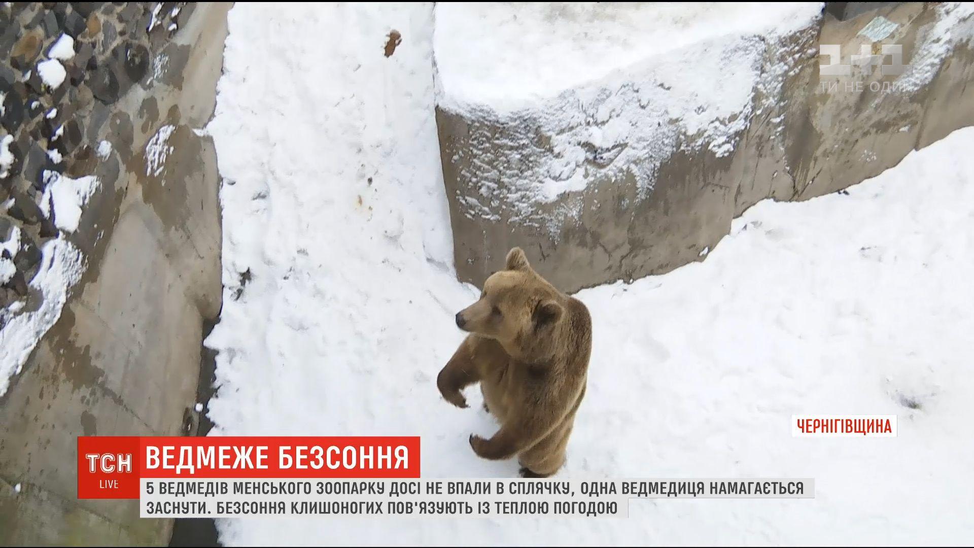 Когда медведи впадают в спячку, они не едяти не пьют / Скриншот