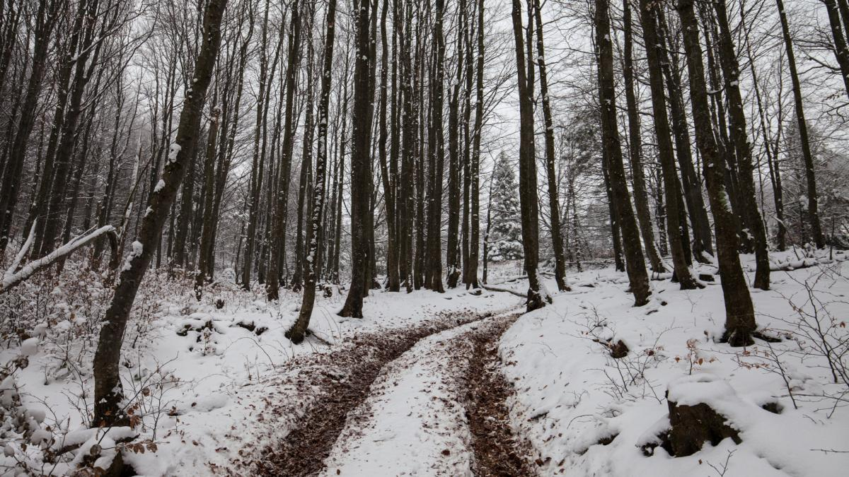 Иногда проще и безопаснее пройти пару километров пешком / Фото Вероника Кордон