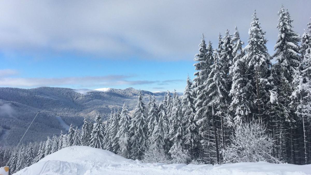 Зимние Карпаты невероятно красивы / Фото Вероника Кордон