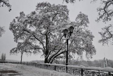 Завтра в Украине сохранится морозная погода (видеопрогноз)