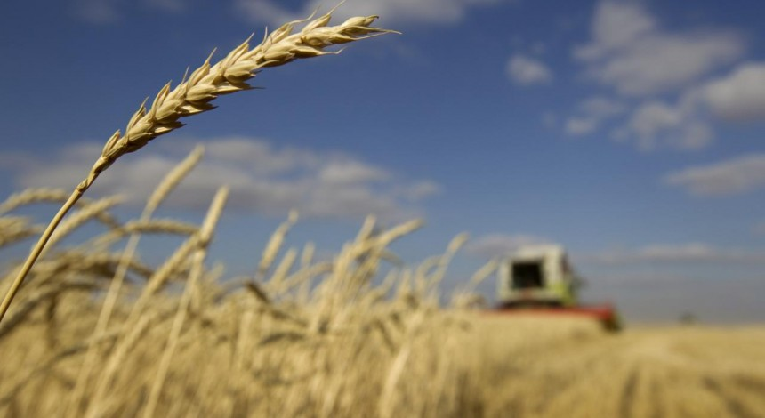 Ukraine's sea port grain exports down on week