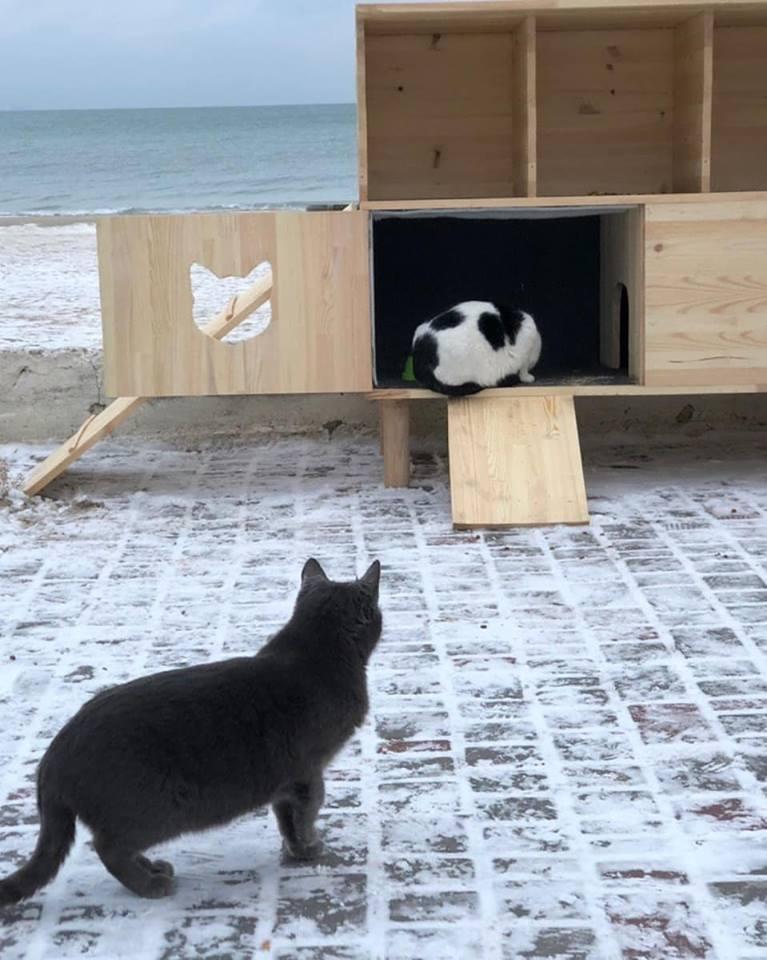 Жители города могут приехать на набережную и подкормить животных \ Денис Феденко/Facebook