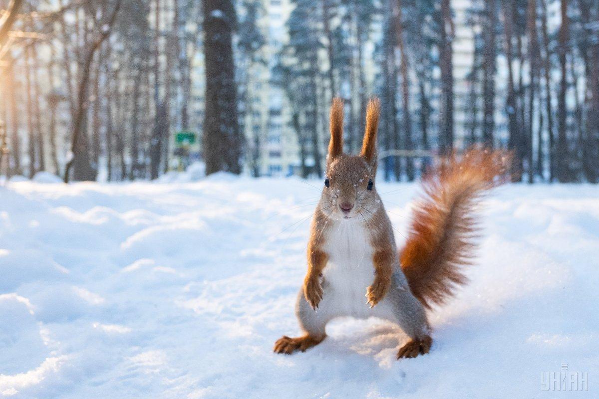 З 5 лютого очікується різке похолодання  / фото УНІАН