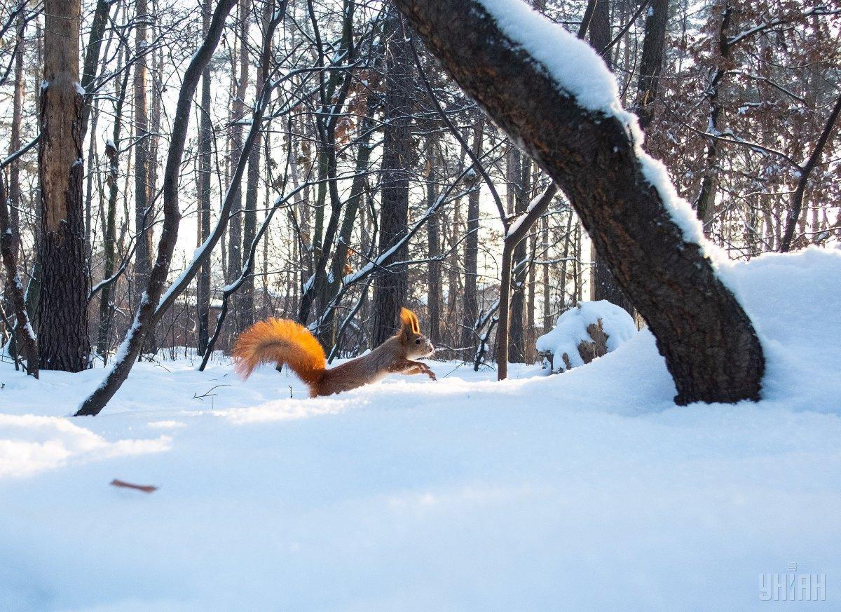 Потепління почнеться з 17 лютого / Фото УНІАН