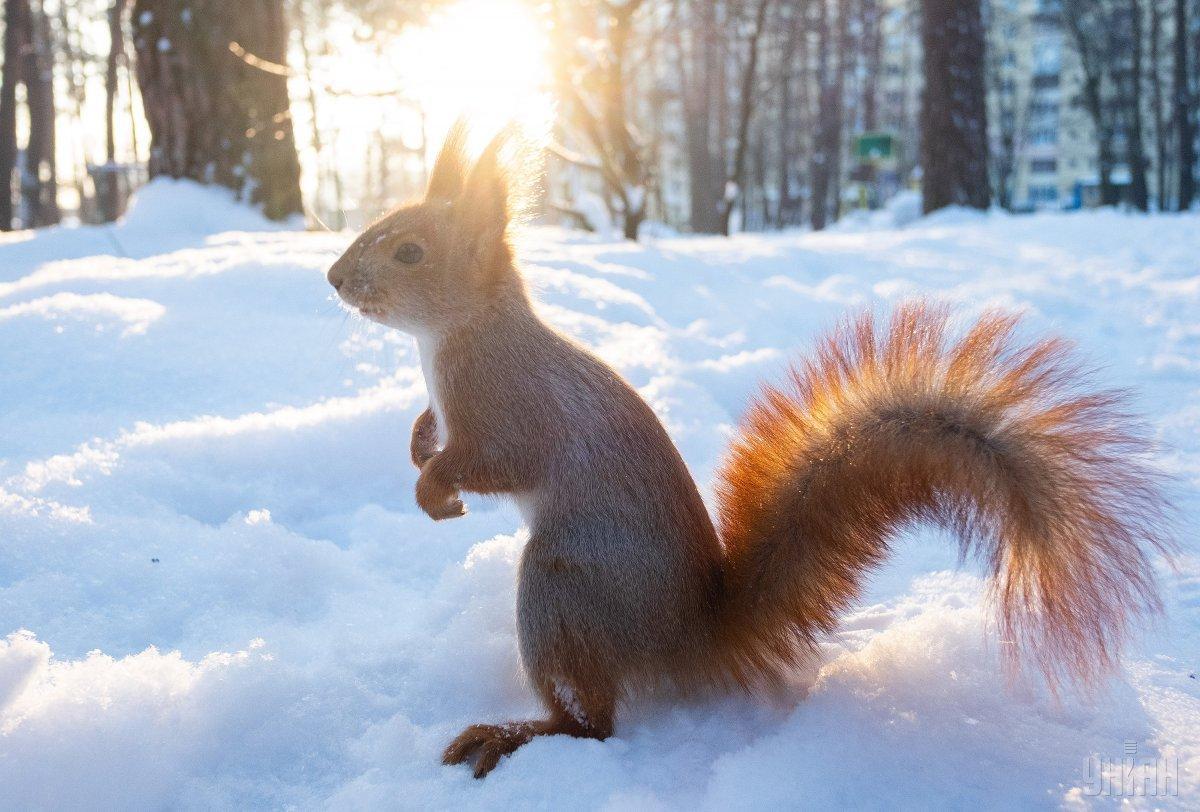 Народный синоптик рассказал, каким будет февраль в Украине / Фото УНИАН