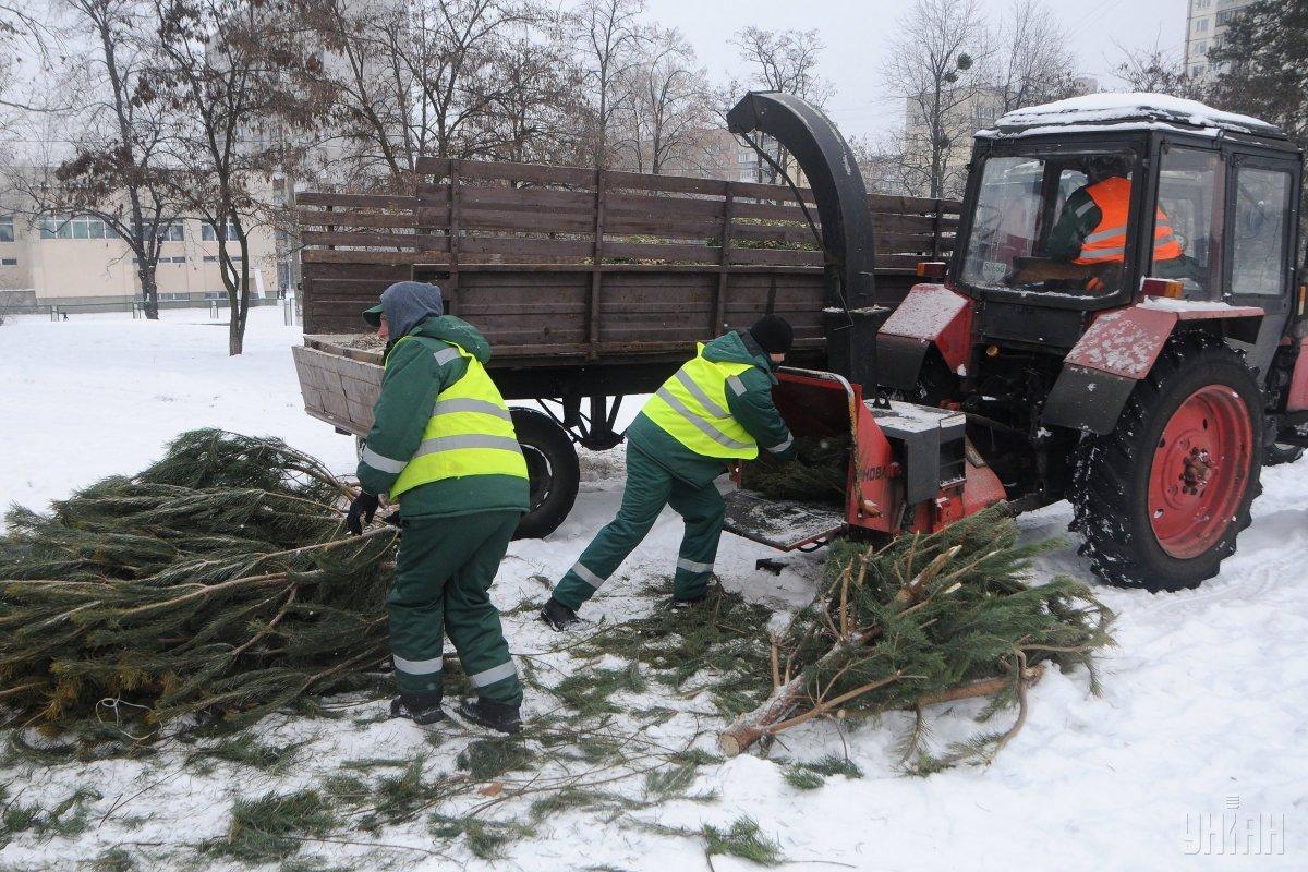 По данным городских властей, в прошлом году пункты на базе районных предприятий приняли от населения более 5 тысяч елок на утилизацию / фото УНИАН