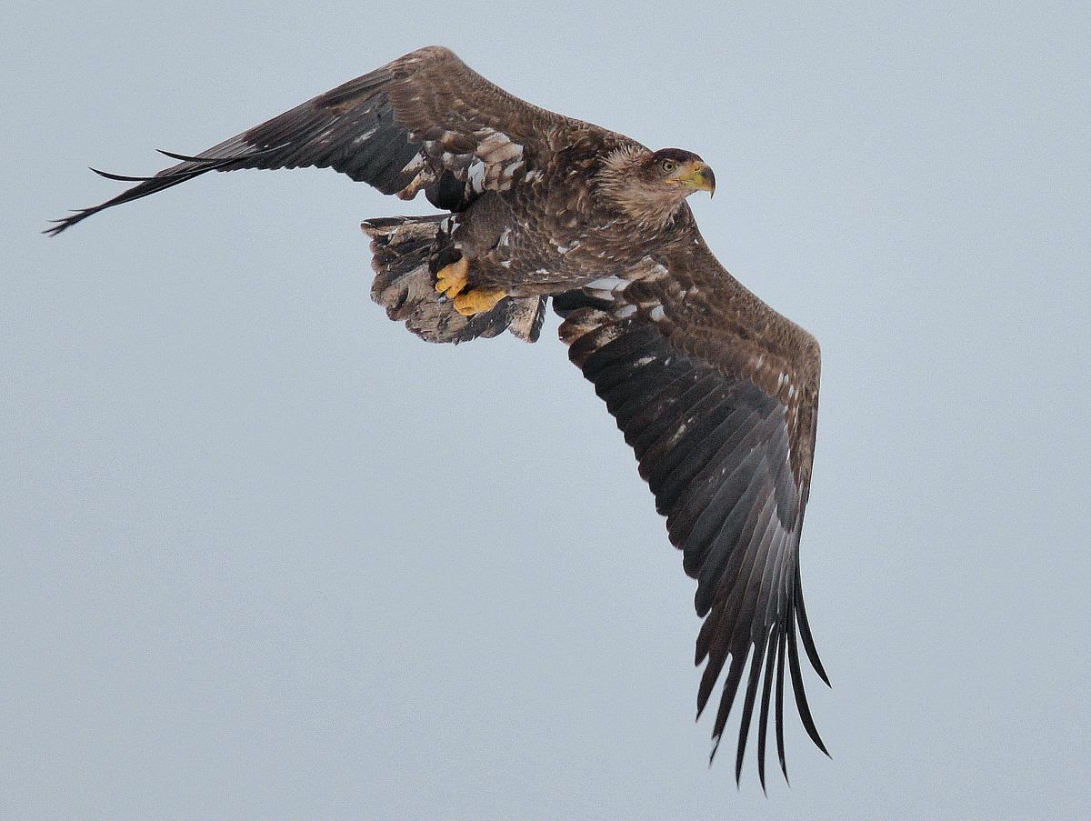 У Чорнобильській зоні відчуження можна буде спостерігати за птахами / прес-служба ДАЗВ