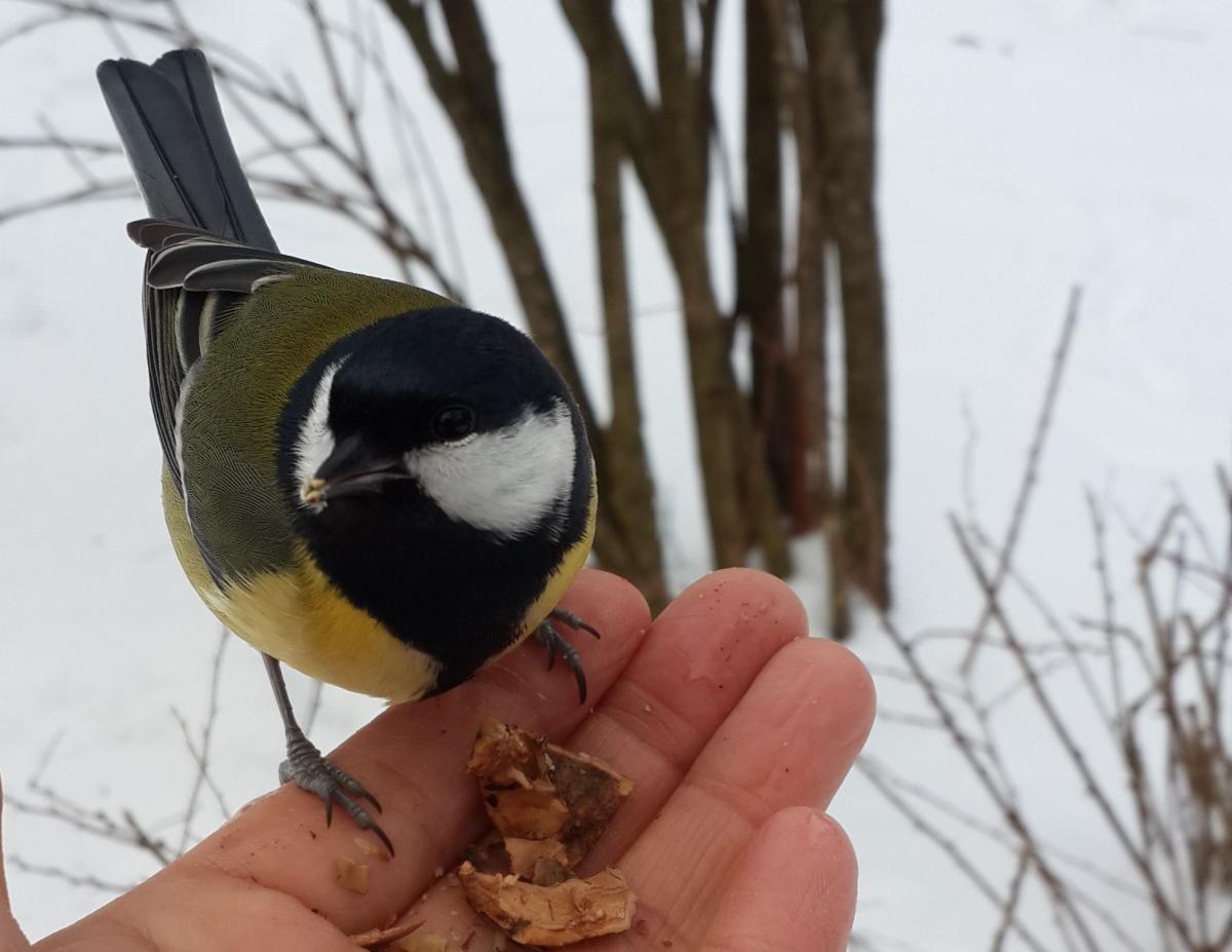 Зимой птицы не стесняются брать еду с рук / Фото Марина Григоренко