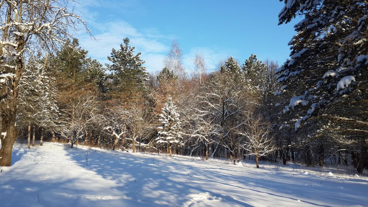 Зима в трускавецком парке / Фото Марина Григоренко