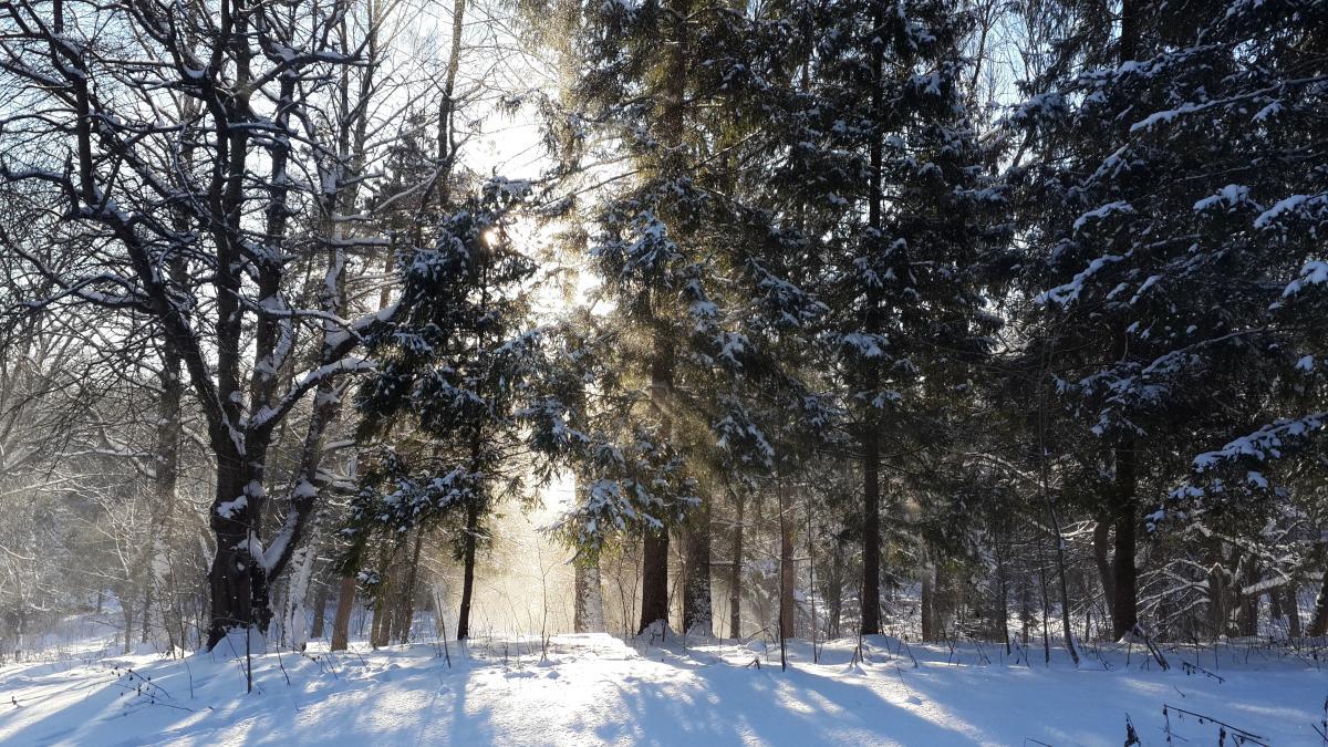 Теплее всего 10 февраля будет на Прикарпатье, Львовщине, Волыни, Ривненщенеи Тернопольщине / фото Марина Григоренко