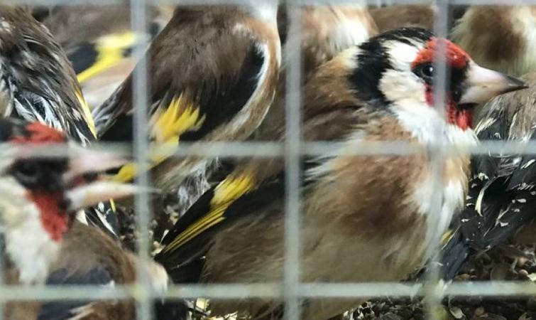 Некоторое время птицы находились в тесных клетках без еды и воды / фото Минэкологии