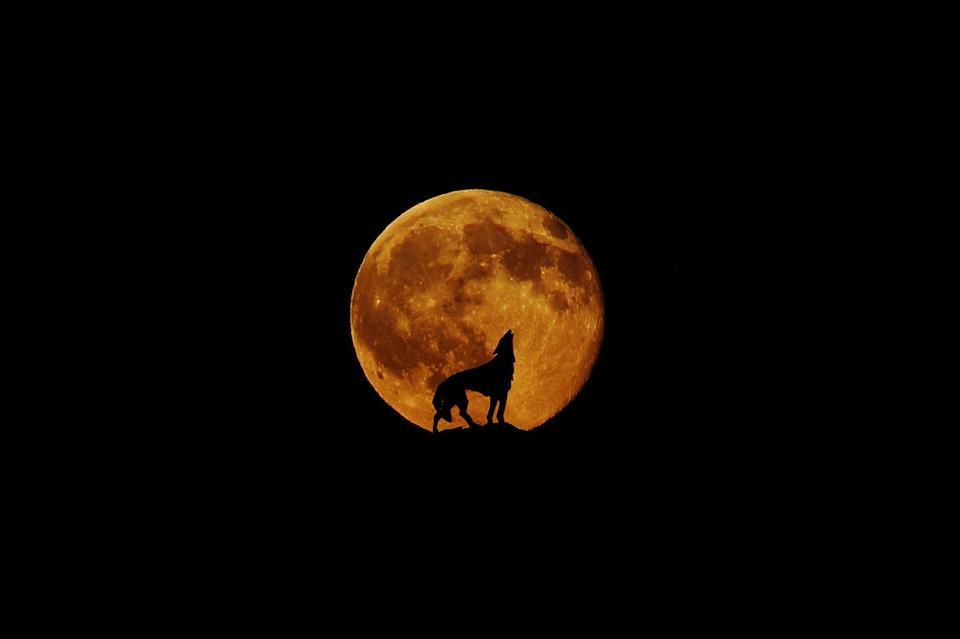 Полнолуние совпадет с лунным затмением / фото pixabay.com