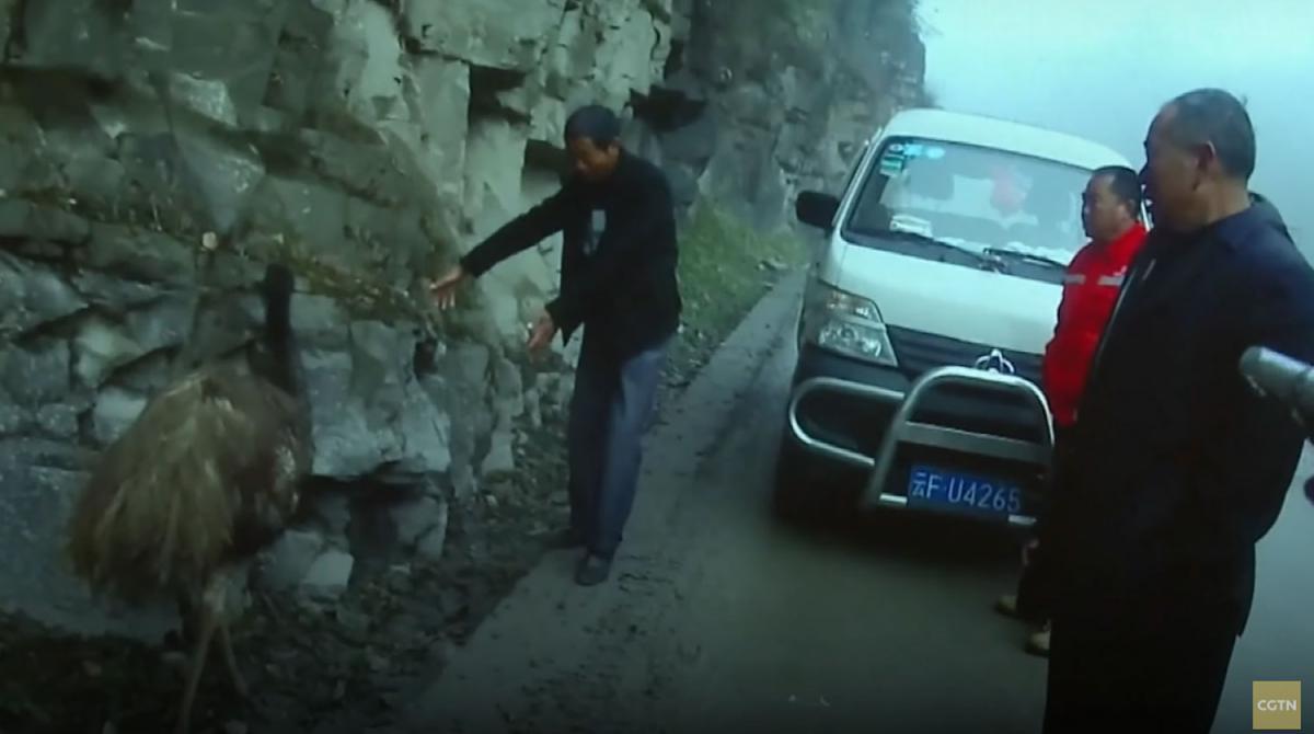 В результате задержания страус не пострадал / фото CGTN