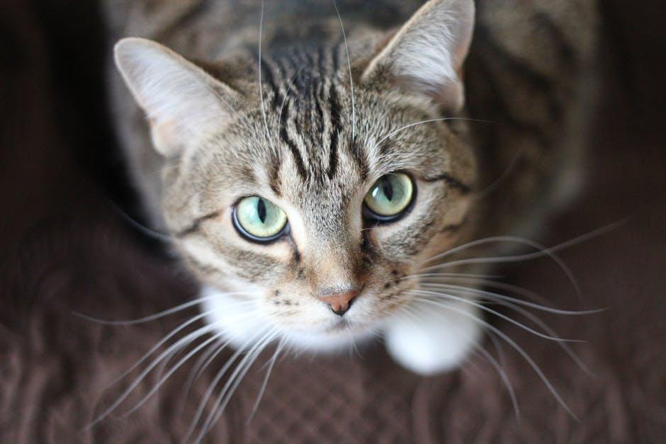 Животных прививают с 3-месячного возраста \ pexels.com