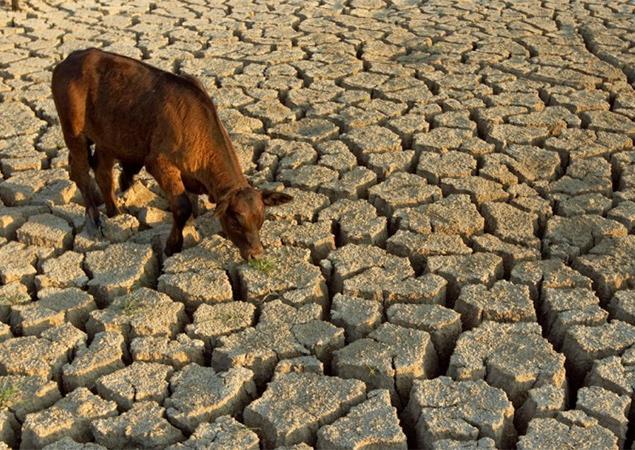 Намибия страдает от засухи / cikavosti.com