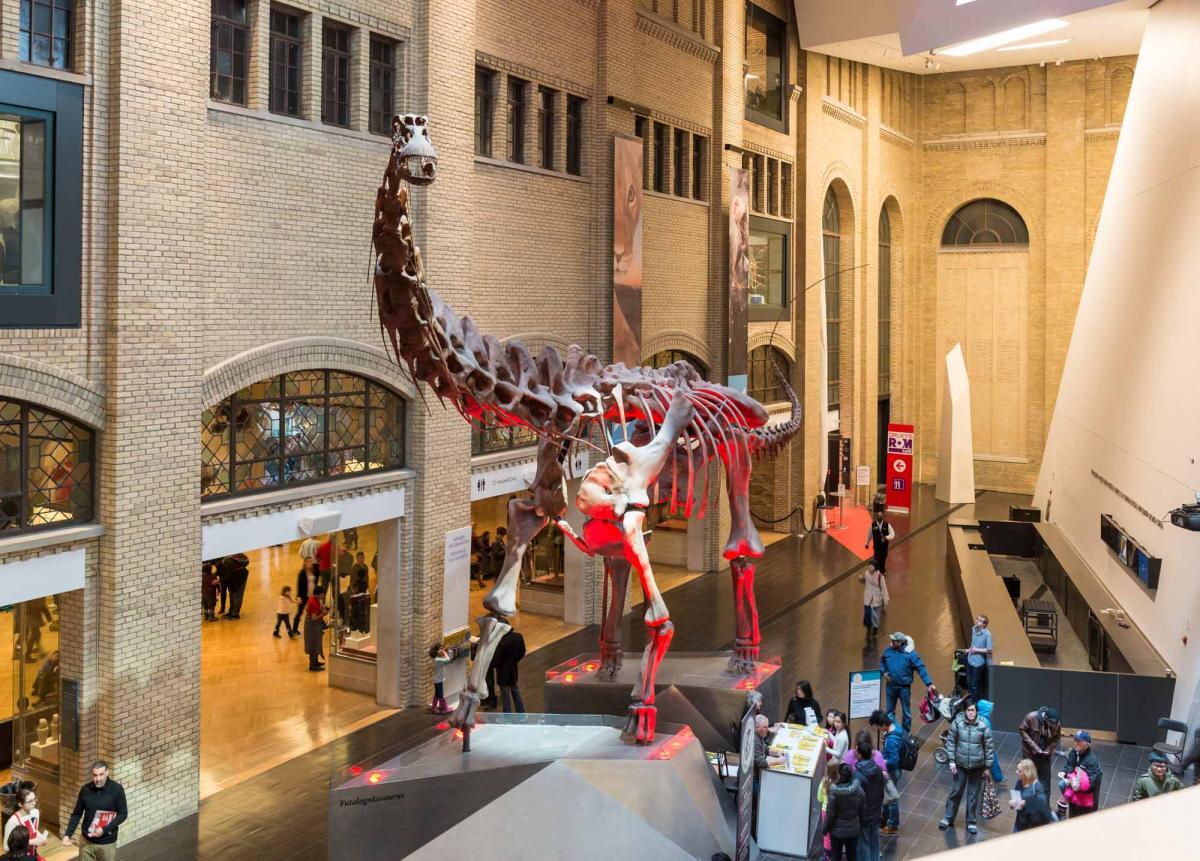 Экспонаты Королевского музея Онтарио / Фото google.com
