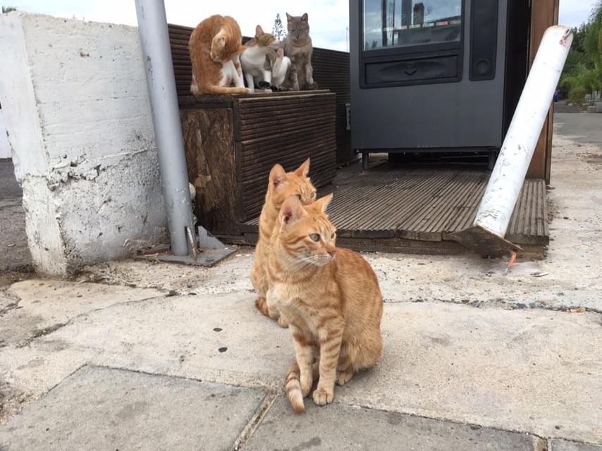У Львові порахують вуличних котів / фото Андрій Василюк