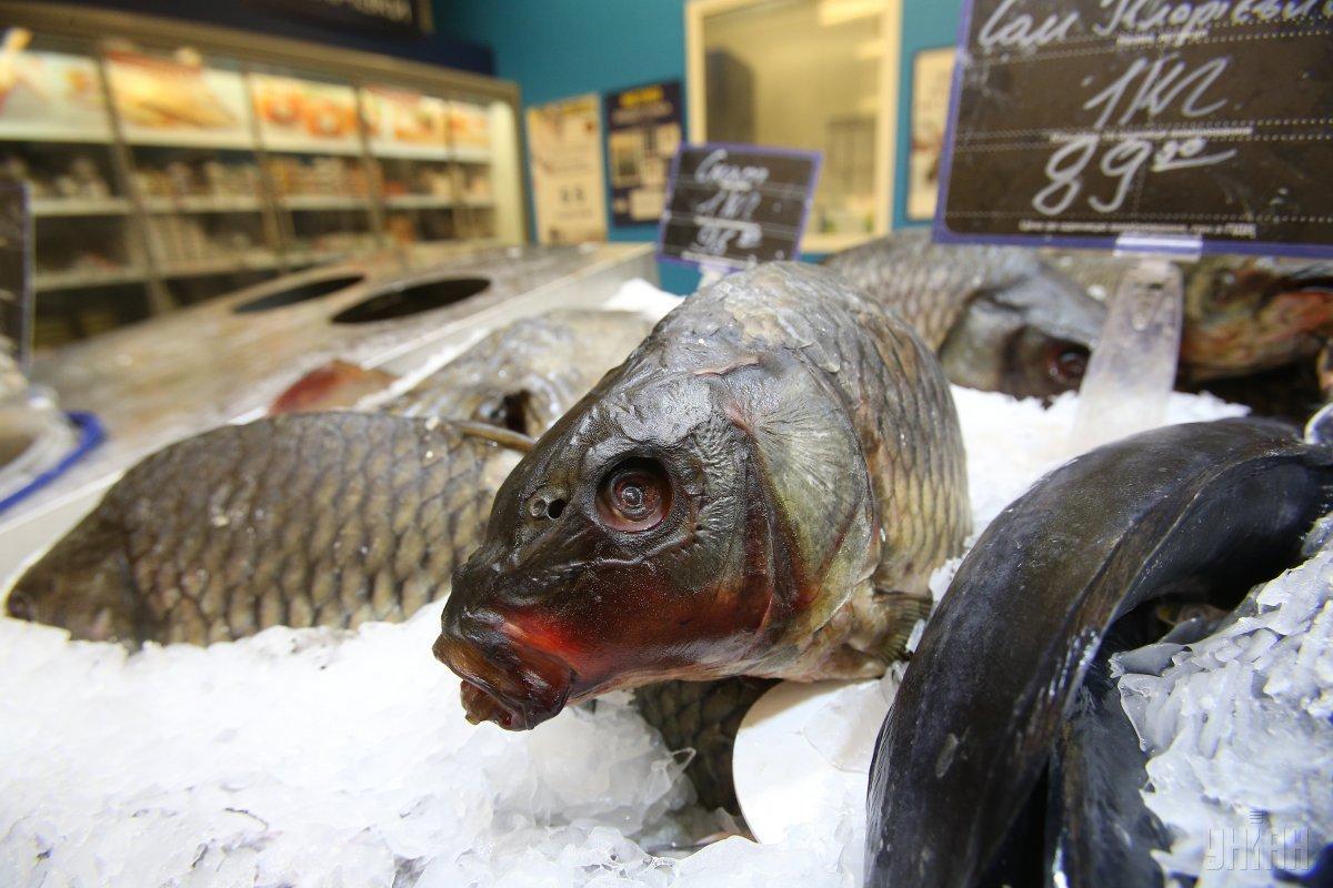 Украина в 2018 году сократила вылов рыбы на четверть / фото УНИАН