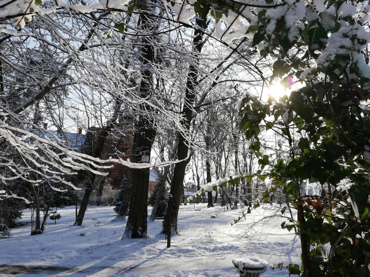 Дендропарк при Черновицком университете / фото Марина Григоренко