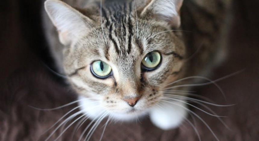Їжа для котів: чим і за які гроші українці годують своїх домашніх улюбленців (відео)