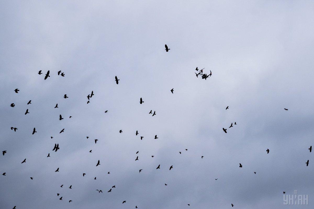 На Днепропетровщине уменьшается популяция птиц / фото УНИАН
