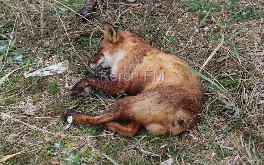 """В районе промывки песка после уничтожения части дамбы начали гибнуть животные / """"Керчь.ФМ"""""""