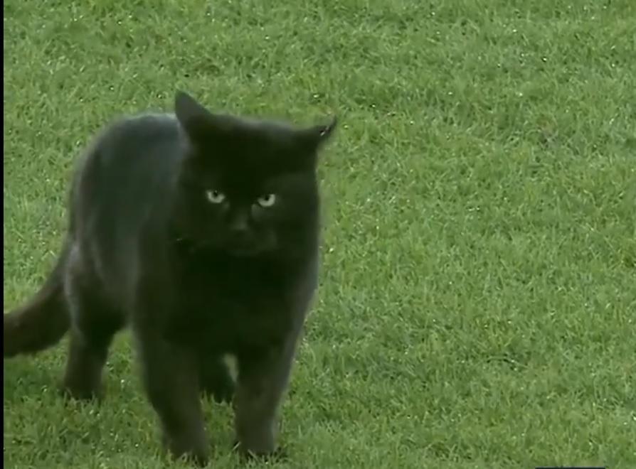 Кіт став зіркою футбольного вечора / скріншот