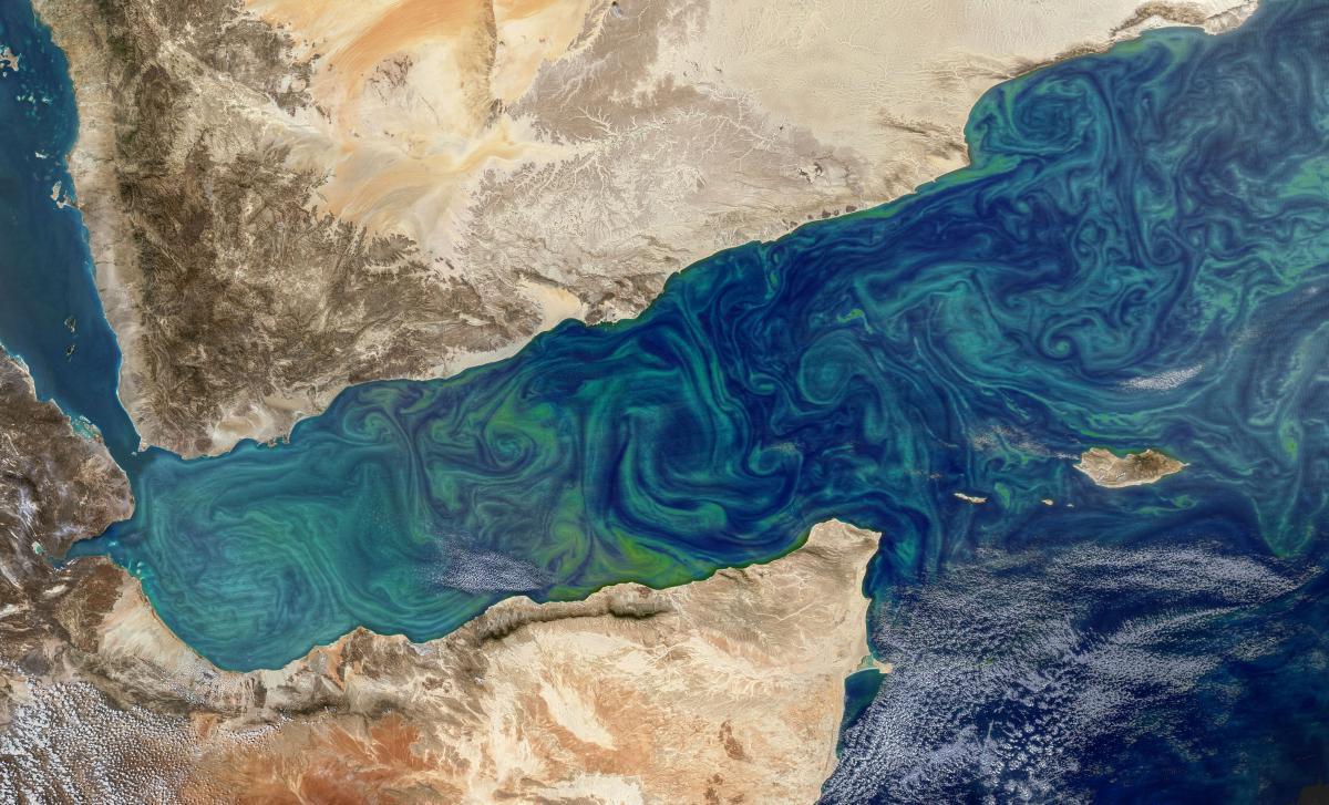 По снимкам спутников можно оценить количество фитопланктона в том или ином районе / фото NASA's Earth Observatory