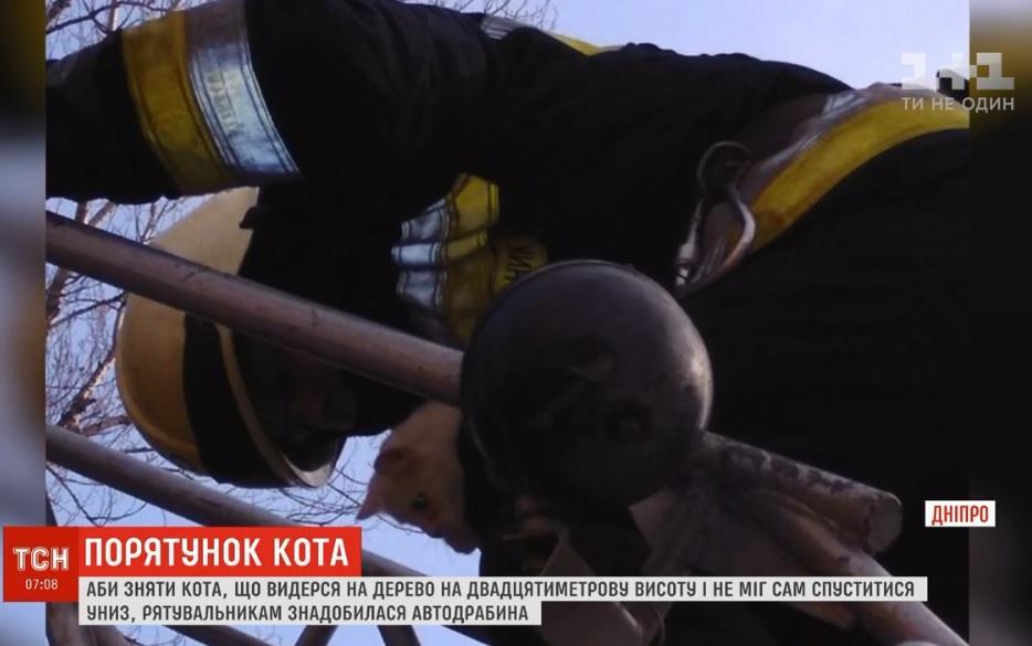 Спасатели Днепра спасли кота-верхолаза / Скриншот - ТСН
