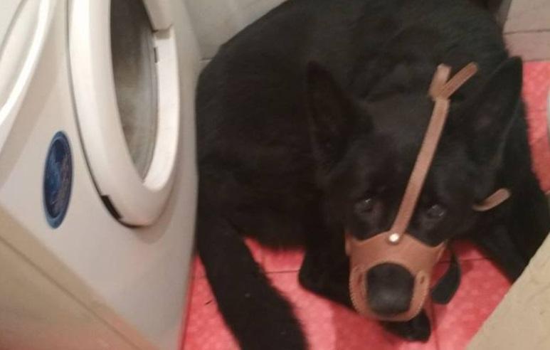 Во Львове женщина натравила собаку на прибывших по ее вызову полицейских / Фото: Facebook Нацполиции