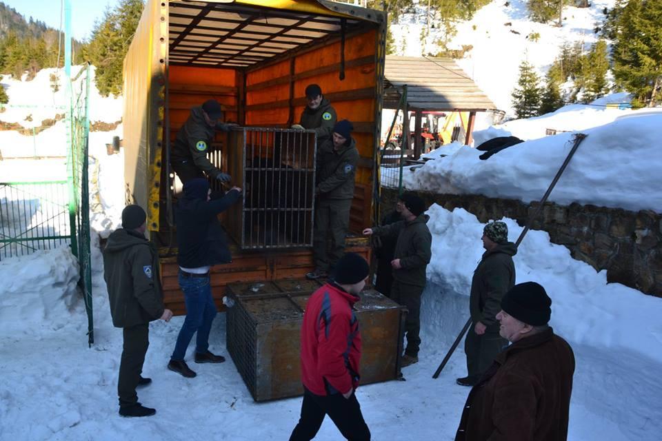 Транспортировка животных прошла успешно, без происшествий / Фото: Facebook
