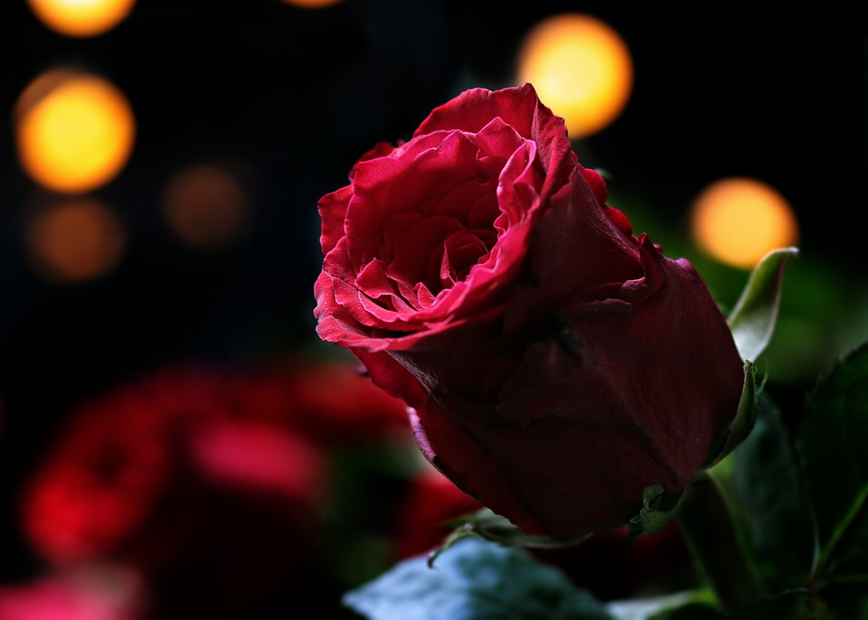 14 февраля влюбленные дарят друг другу подарки / фото pixabay.com