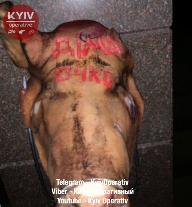Голову свиньи накололи навилы/ фото Киев оперативный