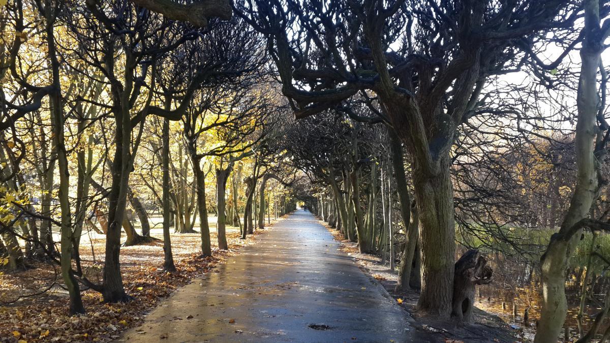 Чтобы избавиться от стресса, нужно ходить в парк хотя бы на 20 минут и без Facebook / Фото Марина Григоренко