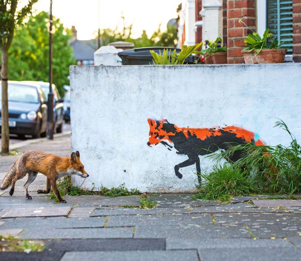 Лисиця на вулиці в центрі Лондона \ Метью Моран