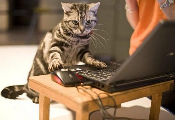 4 квітня відзначається День веб-майстра / фото cards.tochka.net/