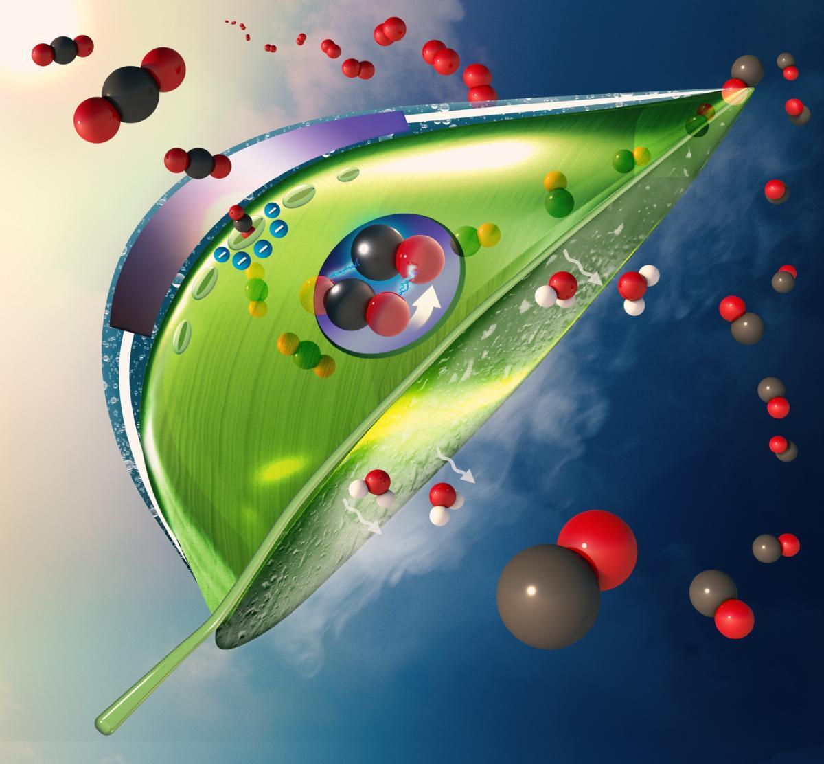 Искусственный лист преобразует CO2в угарный газ (CO) и кислород / фото Meenesh Singh/today.uic.edu