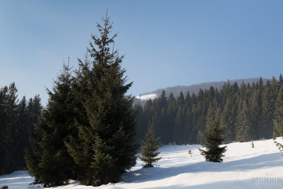 В горах ищут туриста \ Фото УНИАН