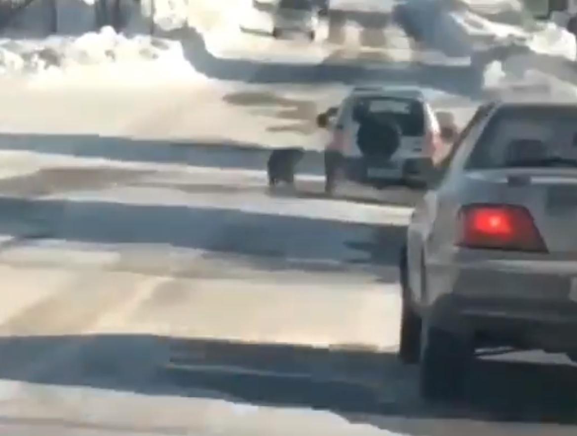 Собака шарахалась от встречных автомобилей / скриншот