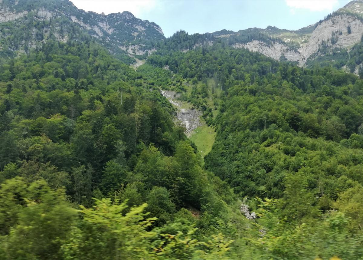 В Верхней Австрии скалистые горы чередуются с густыми лесами / Фото Марина Григоренко