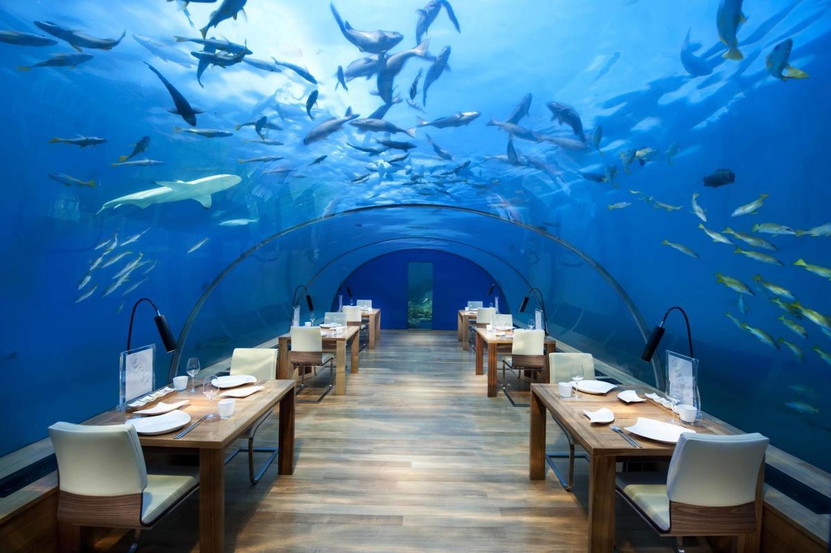 Ресторан под водой Submarino / Фото oceanografic.org