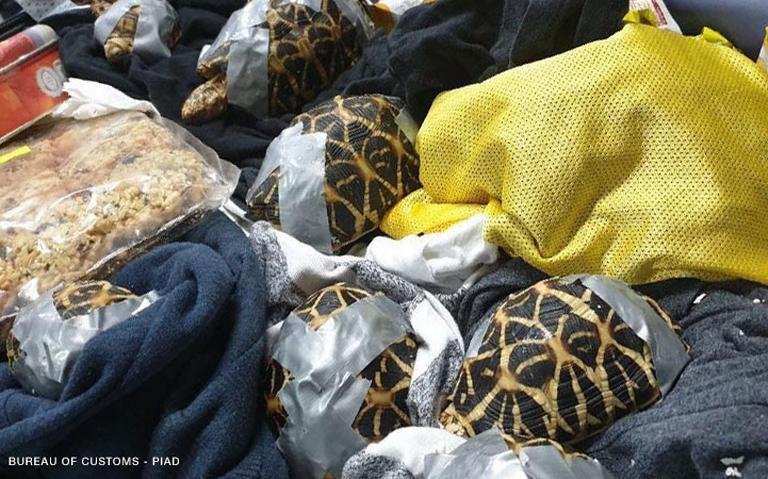 Ихвчетырех сумках оставил один изпассажиров / Фото: Piad