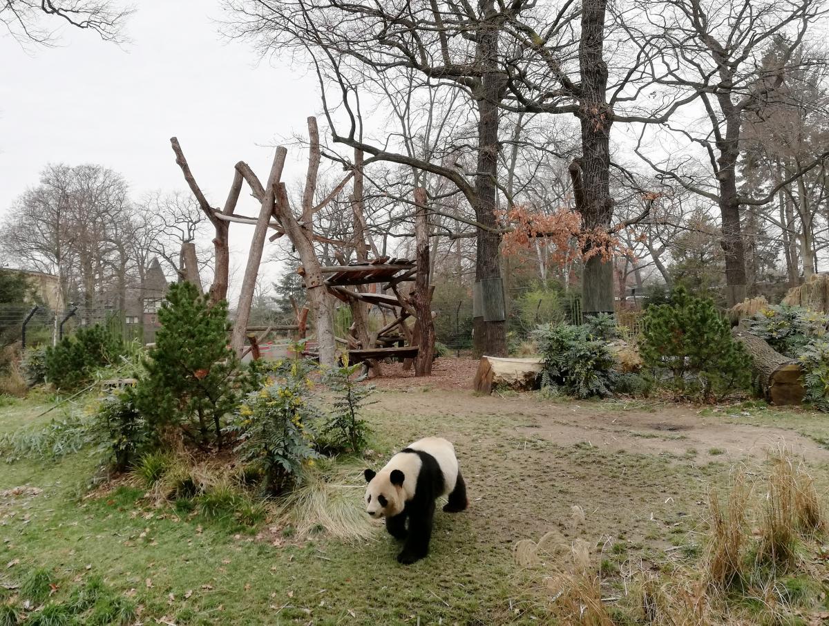 Карточка туриста дает немало скидок - можно сэкономить на билетах в зоопарк, где есть пандочки / Фото Марина Григоренко