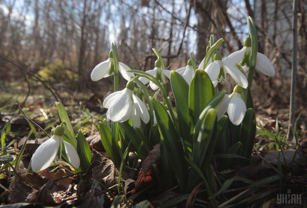 """20 березня - день, коли """"весна зустрічається із зимою"""" / фото УНІАН"""