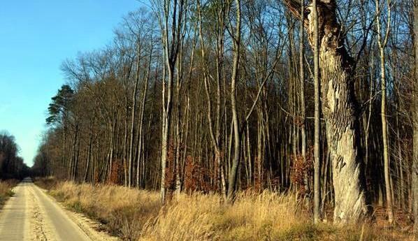 Веломаршрут будет пролегать по пути узкоколейки австрийского периода / фото loda.gov.ua