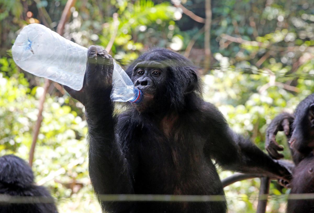 Приматы могут подхватить коронавирус / Иллюстрация REUTERS